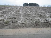Loss of soil due to water erosion