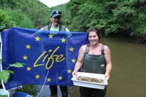 First release of cultured animals in the river Sauer