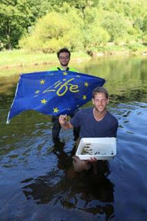 Release of Thick Shelled River mussels in the river Our